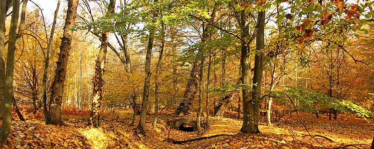 Rodenbacher Wald (c)Apel